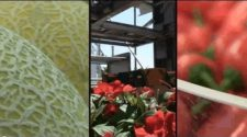 Agriculture: Israeli Expertise Feeds the World